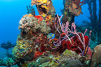 Wreck of the RMS Rhone<br />