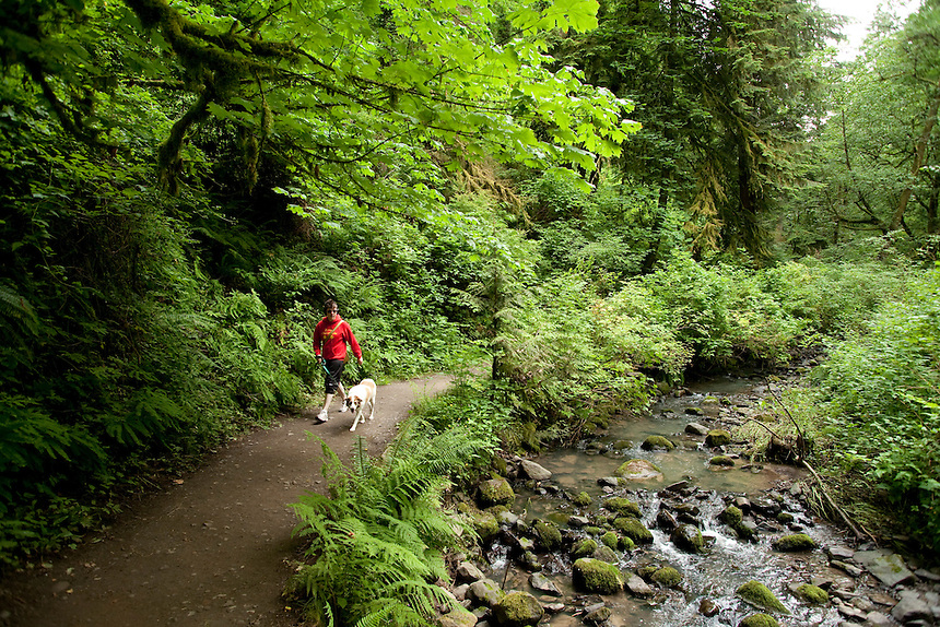 Upper Macleay Trail In Forest Park Portland Oregon
