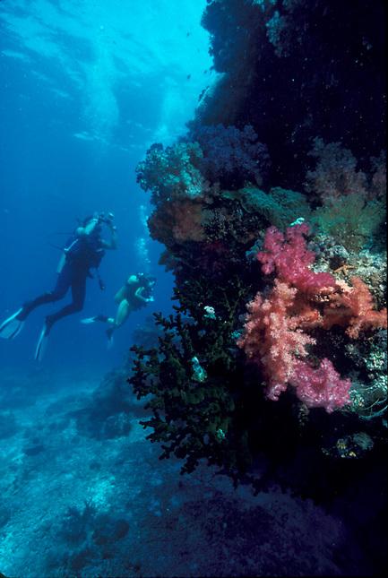 Scuba diver and soft coral