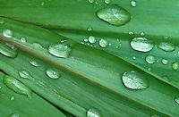 Dew on plant leaves.