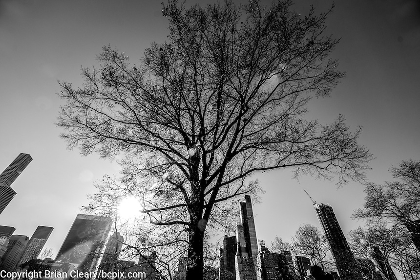 New York City, December , 2016.  (Photo by Brian Cleary/bcpix.com)