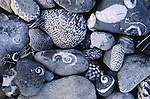 Coral and marine fossils, Alaska