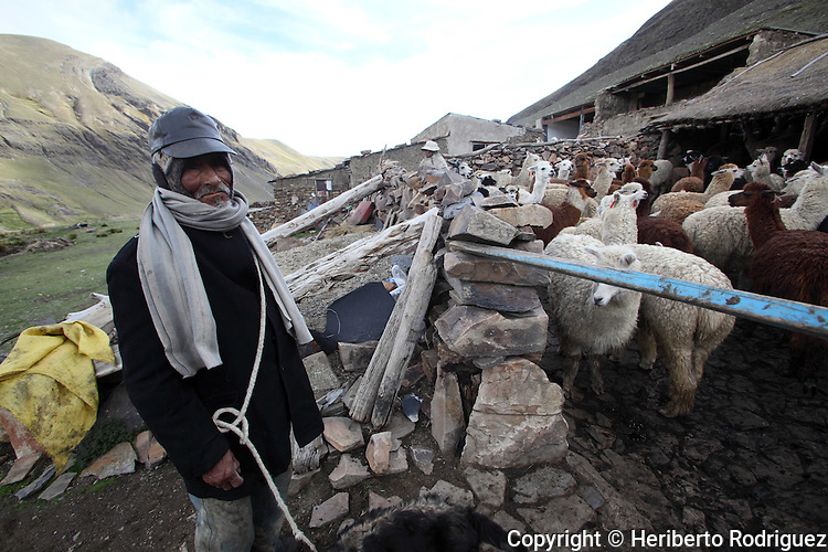 A Bolivian takes care of his llamas as he closes the fence at his home in La Cumbre, north of La Paz, on February 8, 2009. Photo by Heriberto Rodriguez