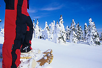 Snowshoeing amongst snow covered spruce trees, interior, Alaska