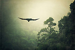 Raven taking off - texturized photograph.<br />