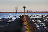 The Ebro Delta, province of Tarragona, Spain. Main coastal delta of the Iberian Peninsula with a variety of different ecosystems including lagoons, sand dunes, salt marsh and rice fields which cover around 15,000 ha today. Picture by Manuel Cohen