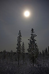 Moonlight showing through snowclouds above the taiga, December 2011.  Image made during the long hours of the polar night, in boreal forest, beside Lake Muddusj&auml;rvi, Inari, Lapland, 300km north of the Arctic Circle in Finland.