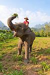 Elephant Hills Thailand