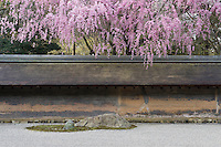 Cherry trees hang over the low wall that surrounds the Ryoan-Ji Temple garden