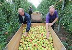 Foto: VidiPhoto<br /> <br /> ANDELST - Sombere gezichten bij het personeel van fruitteler Jan van Olst uit Andelst in de Betuwe donderdag op de eerste dag van de appeloogst (Delcorf). Normaal gesproken is de start van de oogst (nu drie weken eerder dan normaal) een feestelijk gebeuren, maar nu is de kans groot dat het fruit -dat er zeldzaam mooi bij hangt- weinig opbrengt. De Gelderse teler maakt zich grote zorgen. Omdat Rusland de grenzen voor agrarische producten uit Nederland heeft gesloten, dreigt een financi&euml;le ramp voor Nederlandse kwekers en telers. De Poolse bevolking is inmiddels spontaan een actie gestart om meer fruit te eten. Ook Nederlandse fruittelers roepen bij monde van NFO-bestuurslid (Nederlandse Fruittelers Organisatie) Frederik Bunt op om meer fruit van eigen bodem te consumeren. LTO Nederland wil dat het kabinet en de Europese Commissie crisismaatregelen neemt. Nederland is de op &eacute;&eacute;n na grootste exporteur van land- en tuinbouwproducten ter wereld.