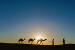 Nomads with dromedaries (camels) in the Sahara desert, Morocco.