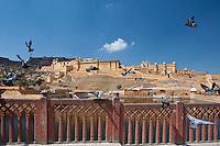 The Amber Fort a Rajput fort built 16th Century and Jaigarh Fort behind in Jaipur, Rajasthan, Northern India