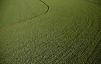 Sugarcane plantation near Ribeirao Preto, Sao Paulo State, Brazil.
