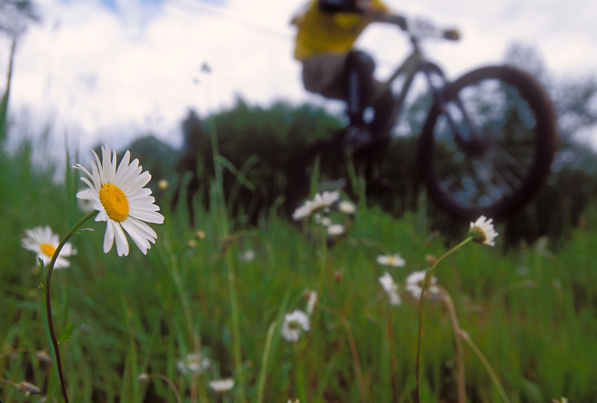 A mountain biker follows a trail past daisies at Marquette Mountain during the Superior Bike Fest competition in Marquette, Mich.
