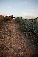 &quot;Agave Walkway&quot; -This sunset, moon, agave plant, and walkway were photographed at Parador San Sebastian, Mexico.