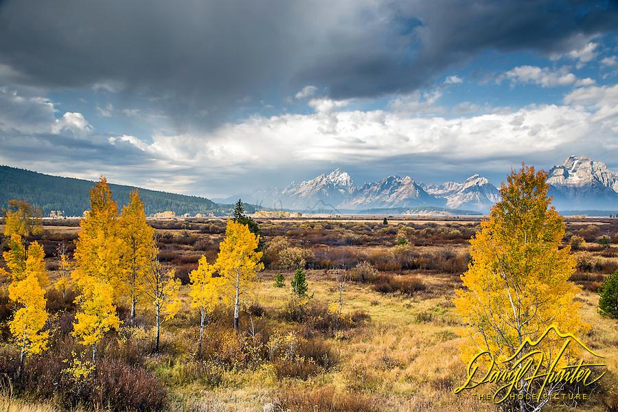 Grand Teton Storm, golden aspen, Willow Flats, Autumn