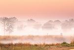 Morning landscape, Kanha National Park, India