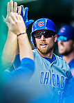 15 June 2016: Chicago Cubs second baseman Ben Zobrist returns to the dugout after hitting a home run against the Washington Nationals at Nationals Park in Washington, DC. The Cubs fell to the Nationals 5-4 in 12 innings in the rubber match of their 3-game series. Mandatory Credit: Ed Wolfstein Photo *** RAW (NEF) Image File Available ***