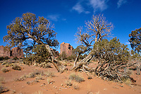DESERT FLORA<br /> Desert Tree<br /> Monument Valley, Utah
