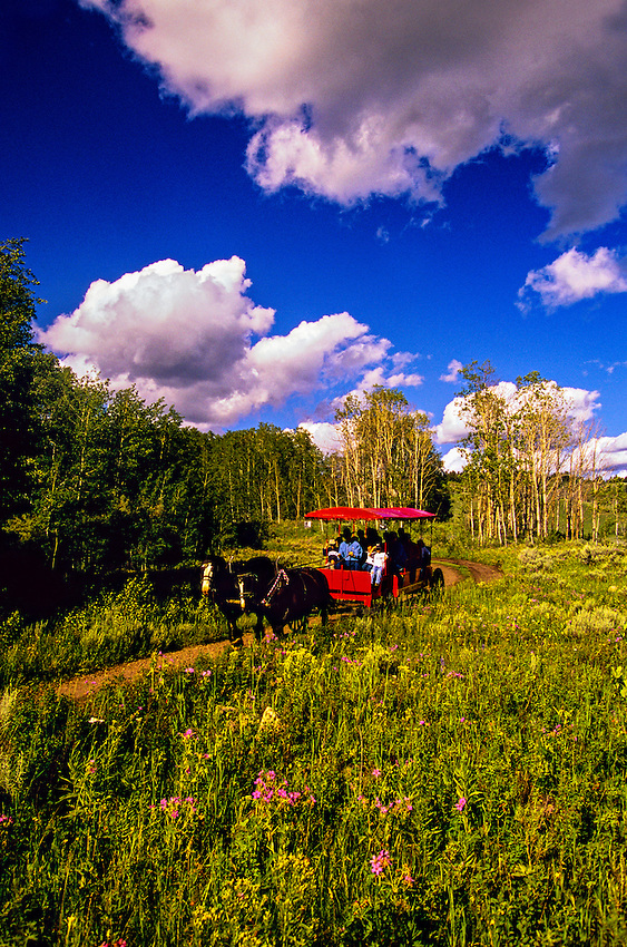 Surrey, Parade Rest Ranch near West Yellowstone, Montana USA