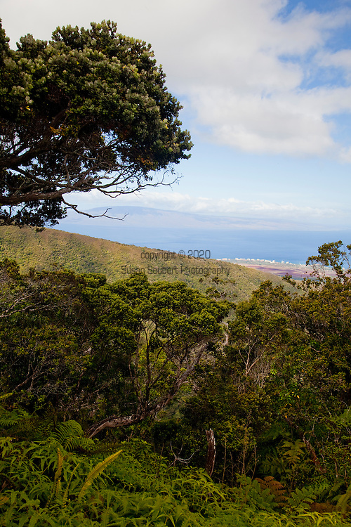 The monthly rain gague hike at the Pu'u Kukui Watershed Preserve, the largest privately held nature preserve in the state of Hawaii, owned by Maui Land and Pineapple.  In the distance is the Ka'anapali Development and the island of Lanai