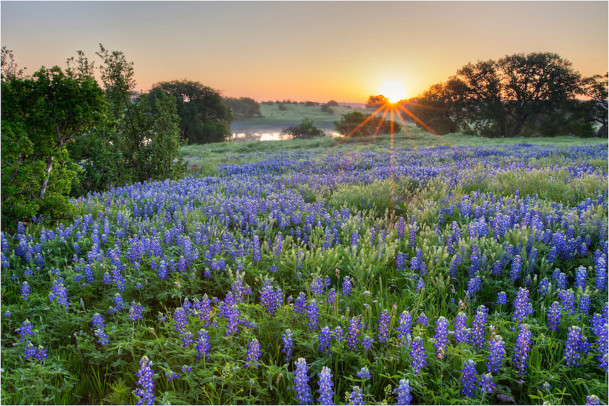 Along CR 310 in the Texas Hill Country, I found this pastoral scene of Texas bluebonnets at sunrise. All was quiet and peaceful with a chill in the air. Mornings don't get much better out here.