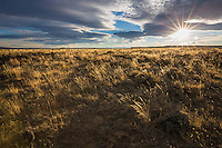 Sagebrush steppe and grasslands in the Bighorn Basin of Wyoming