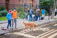 Onlookers allow their dog to play in the flowing water from a watermain break  in the Chelsea neighborhood of New York on Wednesday, October 12, 2016. The watermain break caused water to gush but it was mostly contained to the street safely running into storm drains. (© Richard B. Levine)