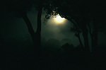 A full moon shines through mist over the rain forest canopy in Danum Valley Conservation Area, Borneo Island.