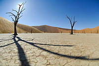 Sesriem Sossusvlei sand dune, Deadvlei with dried salt pan and 5000 year old tree stumps, Namib Desert, Namibia.