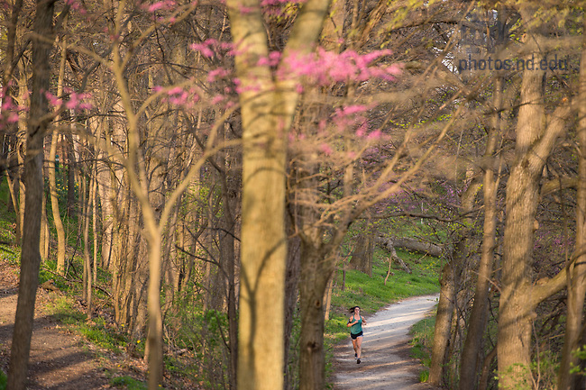 April 18, 2017; A student jogs on the trail around St. Joseph Lake. (Photo by Barbara Johnston/University of Notre Dame)