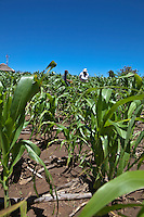 26 January 2011, Berea District. The farm of Thabang Mokone who has been practising conservation Agriculture since 2004.Thabang and his wife, Machomanyane farms at Ha Mamathe. Using conventional farming methods, his maize yield was 60-80kg for the 2.6 acres he cultivated each year. Despite varying weather conditions, Thabang manged to increase his yield to 800kg in 2009/2010.