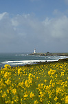 CA: Pigeon Point, California, lighthouse 2005 .Image: capigeon106..Photo Copyright: Lee Foster, lee@fostertravel.com, www.fostertravel.com, (510) 549-2202.