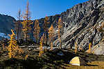 A yellow Sierra Designs 3-season tent is seen among the yellow western larch near Wing Lake, in Washington State's North Cascade range.