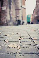 Leafs on the street in Brugge