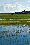 South Carolina Lowcountry sunset dock marsh grass scene HDR