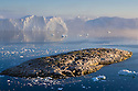 Rocky island and large icebergs at midnight drifting in fiord, end of June, mid summer night; Disko Bay, Greenland