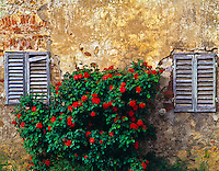 """Wall detail and roses in San Gimignano  San Gimignanp, Italy  Tuscany region  Built beginning in 13th century  """"City of Beautiful Towers"""""""