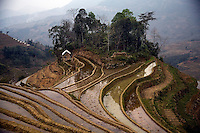 Rice terraces stretch to the horizon in the hills outside of Pangzhihua Village, Yuanyang County, Yunnan Province, China.