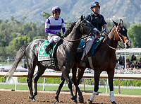 ARCADIA, CA APRIL 8:  #5 So Conflated ridden by Mario Gutierrez in the post parade of the Santa Anita Derby (Grade l) on April 8, 2017 at Santa Anita Park in Arcadia, CA. (Photo by Casey Phillips/Eclipse Sportswire/Getty Images)