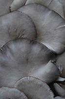 Mushroom Flowers