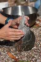 Filz-Stein-Trolle, Steine werden mit gefilzter Wolle, Filz geschmückt, Mütze aus Filzwolle, Steinmännchen als Gartenschmuck im Beet, Trolle mit Filzmütze