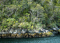 Doubtful Sound rugged coastline with native rainforest, Fiordland National Park, UNESCO World Heritage Area, Southland, New Zealand, NZ