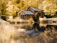 Mabry Mill pond, duck, infrared