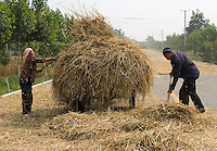 Farmers collect thatch detached from the seeds by the passing vehicles on the road, near Yongji, Shanxi province, China, on June 12, 2010. Known as the country of rice, China is also the world's main producer of wheat, with an annual output of 112 million tons. In this little village of Shanxi province, Chinese farmers use a clever way to detach the wheat's seed from the thatch. They lay the wheat down the public road, and wait for vehicles to drive. The velocity's strength detaches the seeds from the thatch. The farmers need not to beat the wheat manually anymore. Photo by Lucas Schifres/Pictobank
