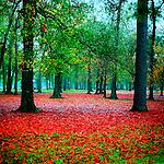 A beautiful, boldly-colored decorative landscape photo.