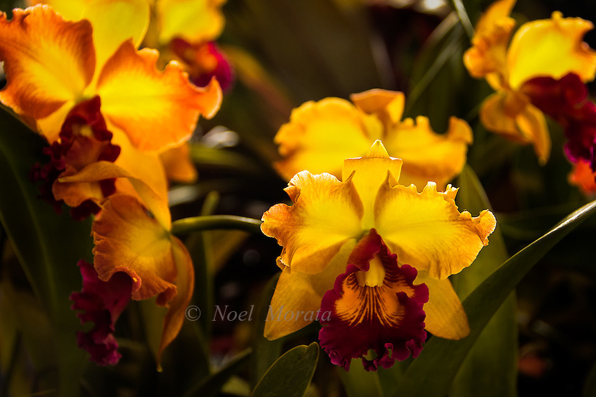 Hilo Orchid Show 2012, A highlight of beautiful orchids from this year's orchid show.