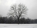 The Night Stage tree in the winter. 2007. ..Image from the book project Welcome Home: Building the Michigan Womyn's Music Festival, self-published First-Edition 2009...Photo by Angela Jimenez.copyright 2009 Angela Jimenez Photography