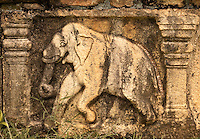 Elephant relief in the ruins of the old city. (Photo by Matt Considine - Images of Asia Collection)