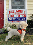 Bellmore, New York, U.S. 22nd September 2013.  Pierre Genuth, a 5 1/2-year-old white Toy Poodle, from Plainview, checks out the sign in front of the Bellmore Chamber of Commerce office with his family, at the 27th Annual Bellmore Festival, featuring family fun with exhibits and attractions in a 25 square block area, with over 120,000 people expected to attend over the weekend.